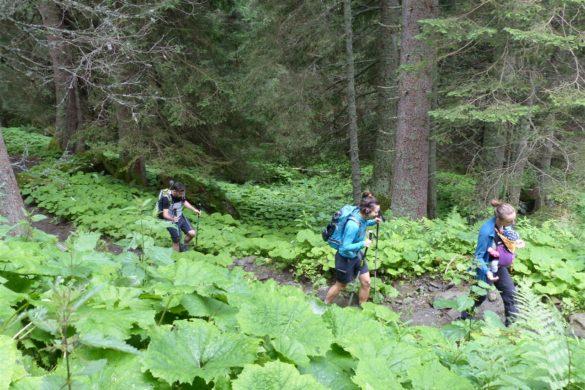 Wandern in Mittersill: Vom Hintersee zum Plattachsee