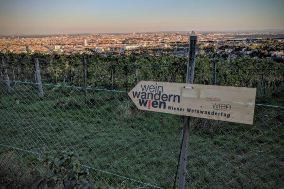 Weinwandern in Wien: Mit Wanderpass, App und Kind durch die Weinberge
