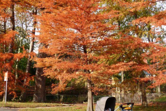 Bilder von unserem Herbst-Spaziergang im Schlosspark Pötzleinsdorf